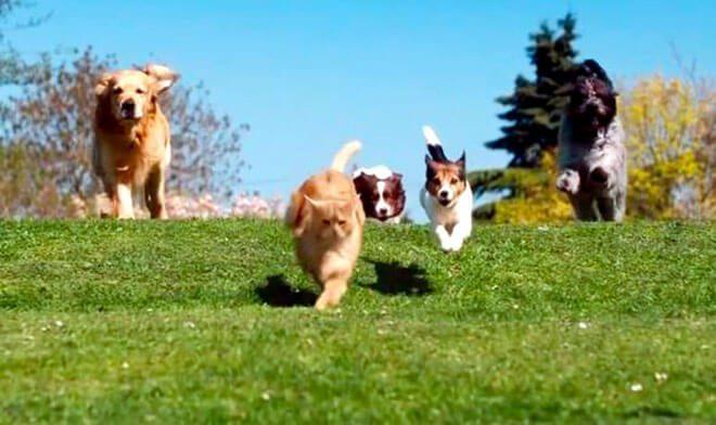 """Il """"gatto di strada"""" attacca i cani"""