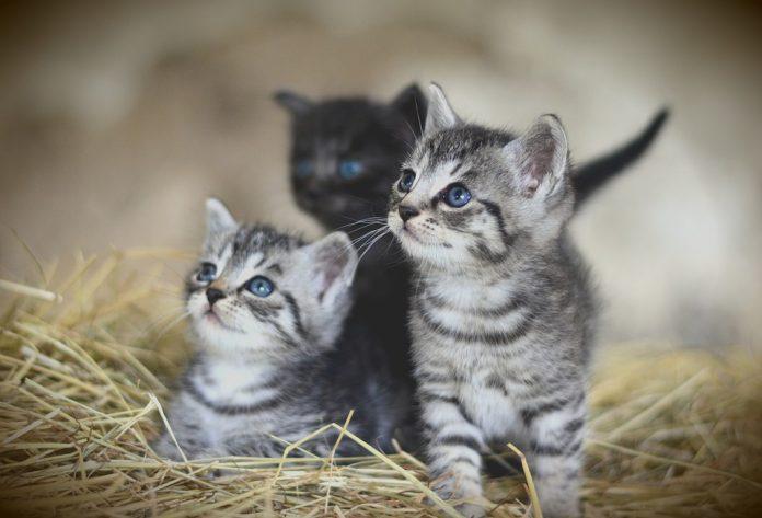 Ho trovato dei gattini. Cosa faccio?